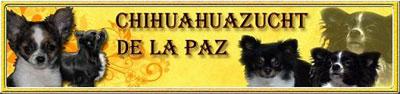 http://www.chihuahua-de-la-paz.de.tl/