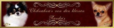 http://chihuahuas-von-den-kleinen-raudies.heim.at/